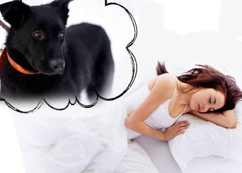 Сонник собака укусила но без боли. к чему снится собака укусила но без боли видеть во сне - сонник дома солнца