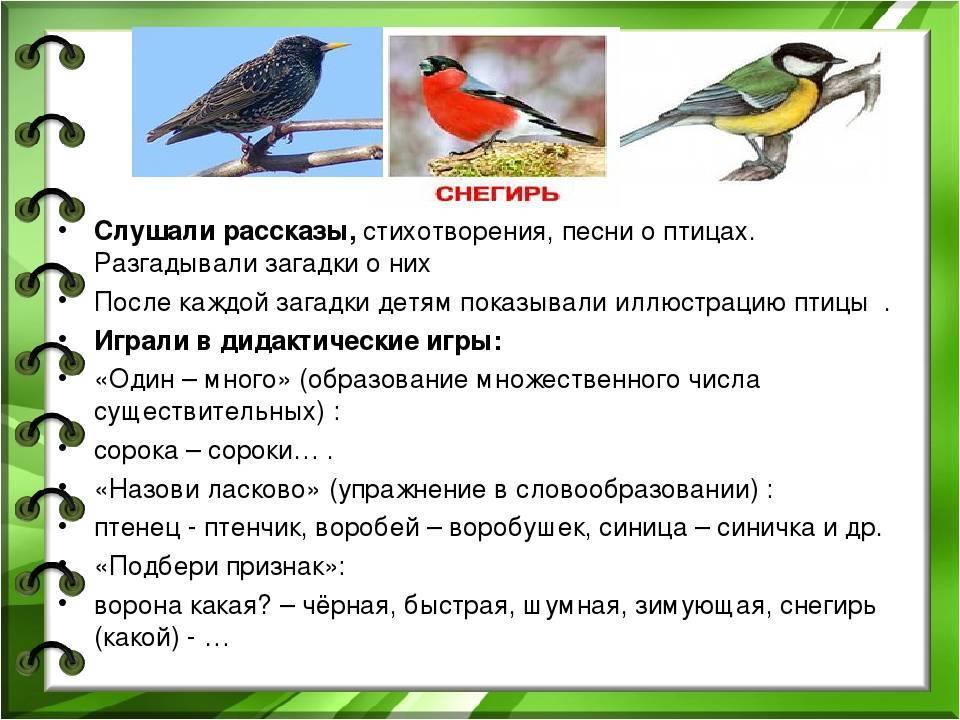 Отрицательная или положительная примета, если в дом залетела птица? как избежать проблем?