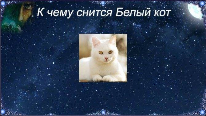 Сонник чёрный кот нападает и. к чему снится чёрный кот нападает и видеть во сне - сонник дома солнца
