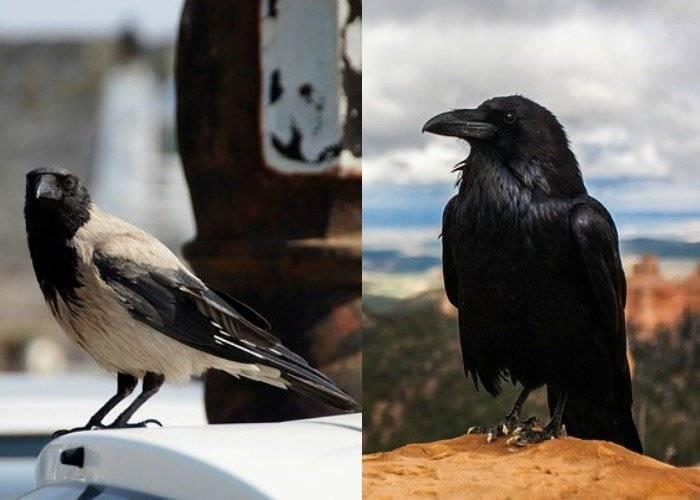 Народные приметы и суеверия про голубей