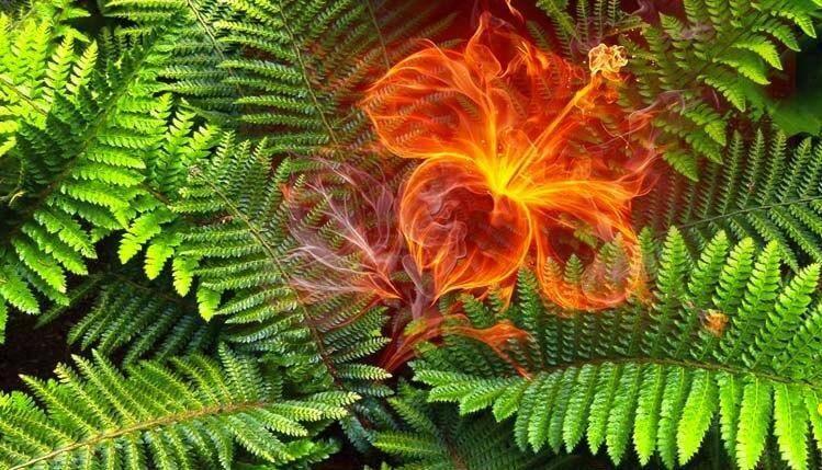 Перунов цвет: значение и правила использования оберега, как и из чего изготовить своими руками, чем цветок папоротника отличается от одолень травы?