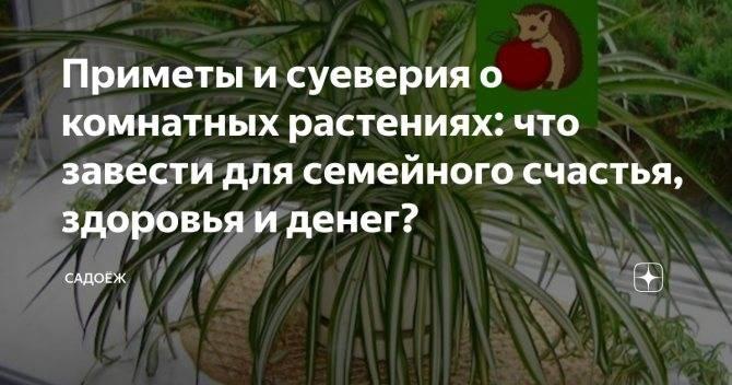Кактусы в доме: хорошо или плохо, можно ли держать цветок в квартире и как он воздействует на жизнь и здоровье человека?