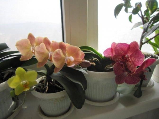 Что привлечет в дом орхидея: народные приметы и суеверия