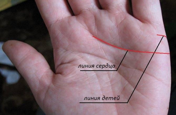 Как узнать по руке, сколько будет детей