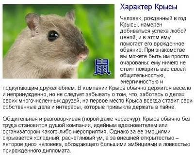 Год крысы - какие года и характеристика