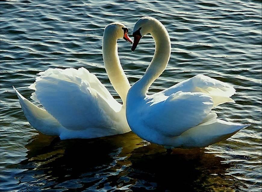Фен-шуй для любви и брака: талисманы для счастливого замужества