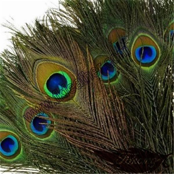 Приметы и суеверия о перьях павлина