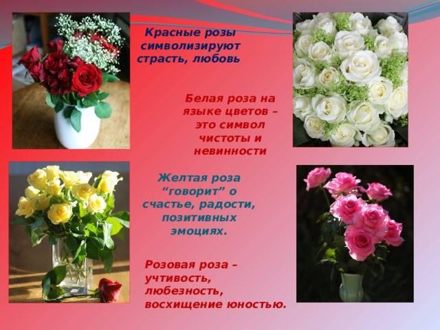 О каких чувствах расскажет подаренный букет роз: значение цветов и количества роз