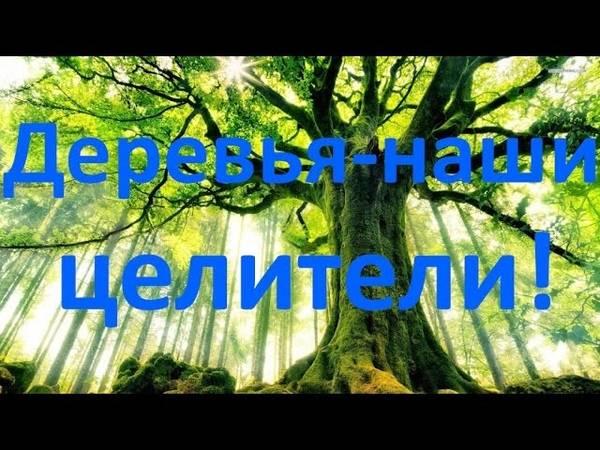Энергия деревьев: лесные доноры и вампиры