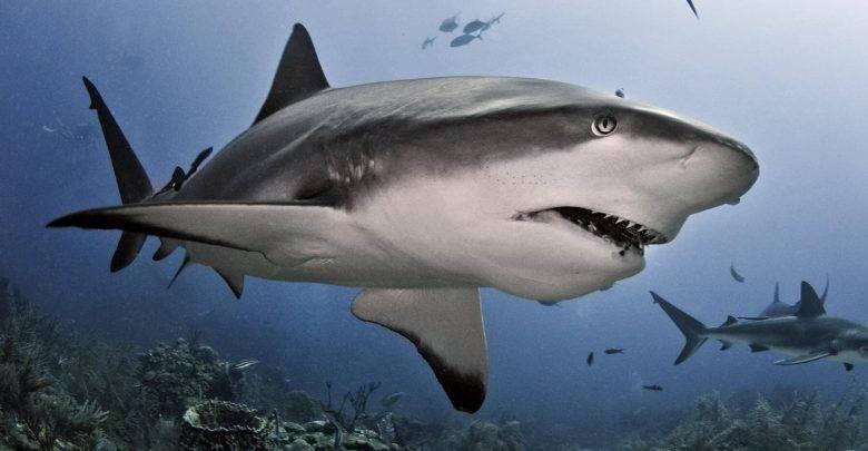 К чему снятся акулы в