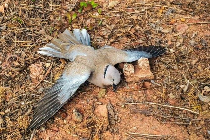 Сонник мертвая птица во сне