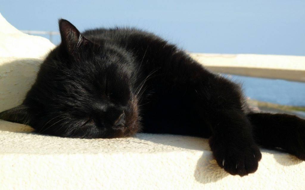 Чёрный кот нападает и