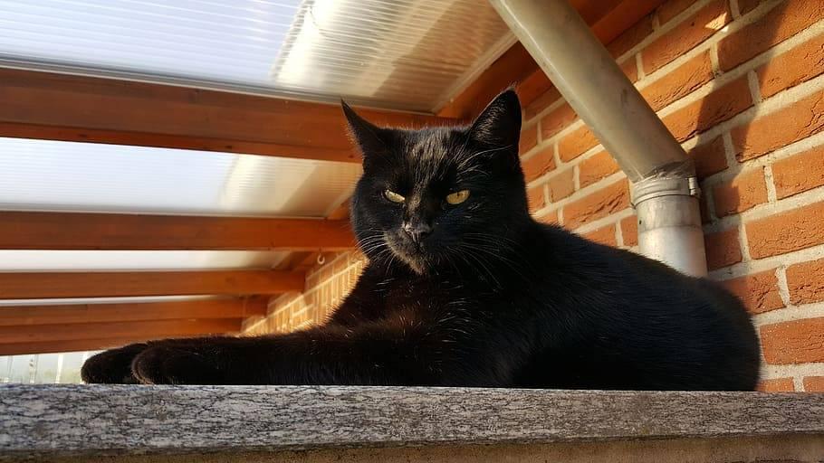 Черный злой кот