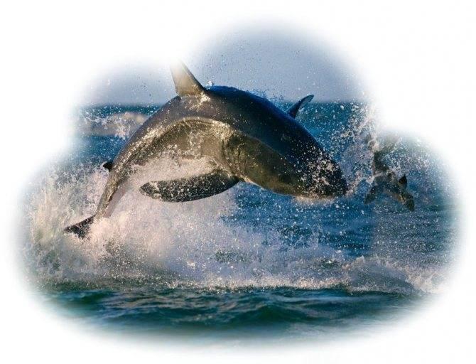 «акула к чему снится во сне? если видишь во сне акула, что значит?»