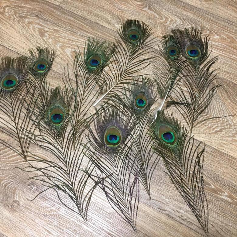 Что символизирует перо павлина? тату и мехенди – перо павлина: значение. можно ли дома держать, дарить, найти павлиньи перья: приметы. как использовать павлиньи перья в интерьере, украшениях: идеи, фо