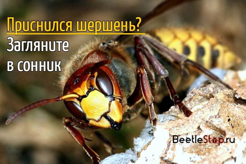 Сонник пчелы оса. к чему снится пчелы оса видеть во сне - сонник дома солнца