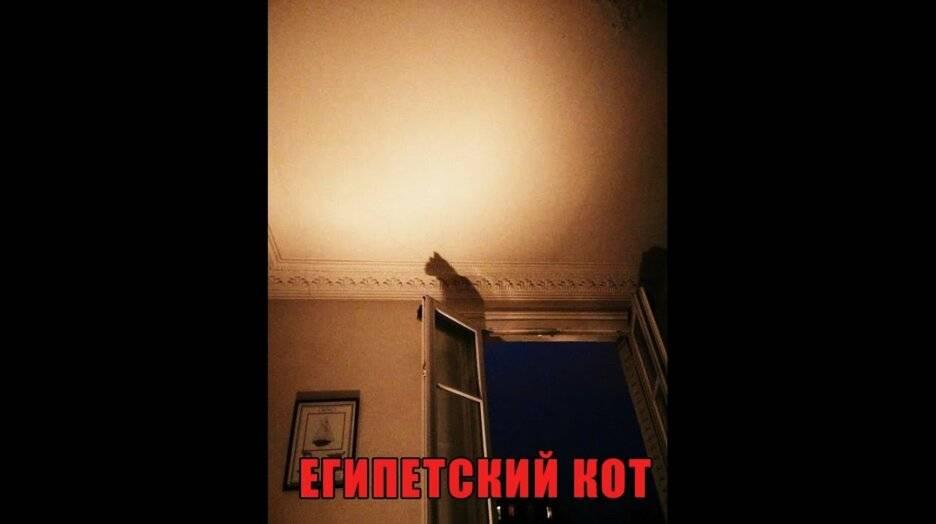 Как вызвать египетского кота правильно
