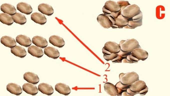 Схема расклада бобов при гадании. гадание на бобах: подробная инструкция с толкованием значений