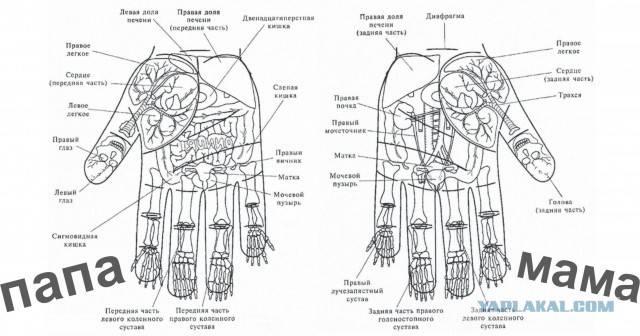 К чему чешется палец на левой руке: большой, указательный, средний, безымянный, мизинец