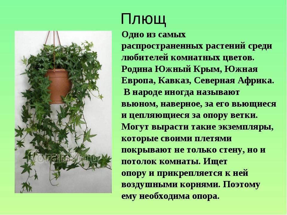Какие цветы нельзя держать дома: фото и приметы, связные с растениями, народные суеверия и советы