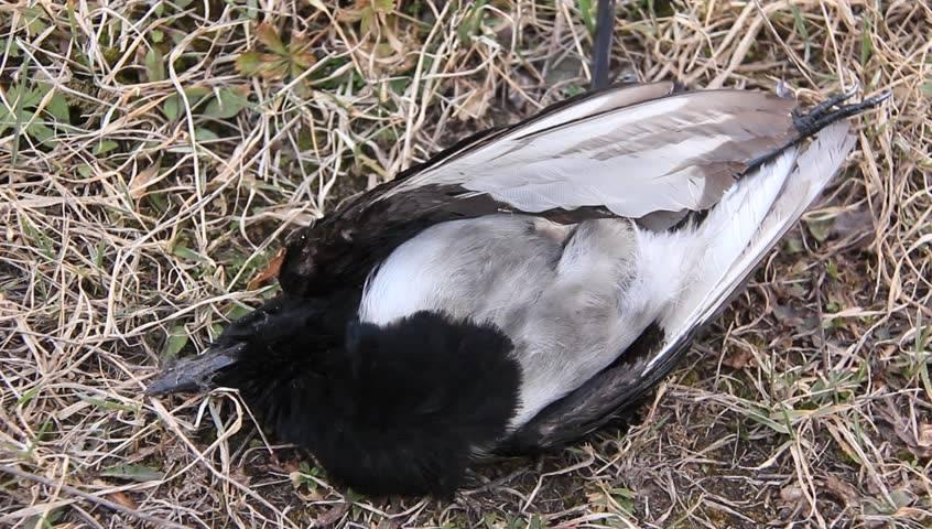 К чему снится птица по соннику? видеть во сне птицу  - толкование снов.