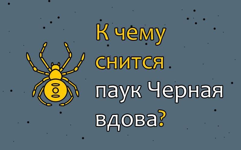 Сонник паук преследует. к чему снится паук преследует видеть во сне - сонник дома солнца