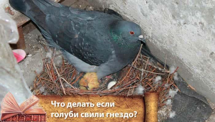 Что значит, если птица свила гнездо в доме