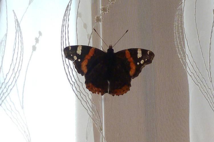 Народные приметы о бабочках – 16 примет и поверий связанных с бабочками