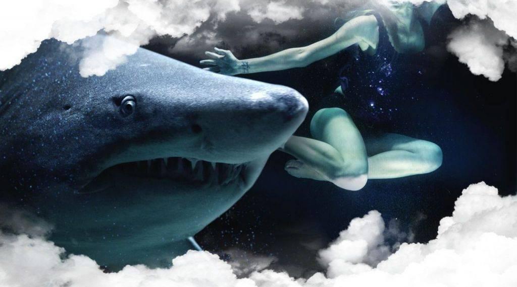 К чему снится акула во сне: женщине, мужчине, в воде, в море, плавает, нападает
