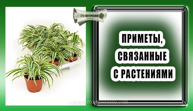 Кактус в доме: польза и вред, советы по уходу. современные научные сведения пользе и вреде кактуса для человека и животных