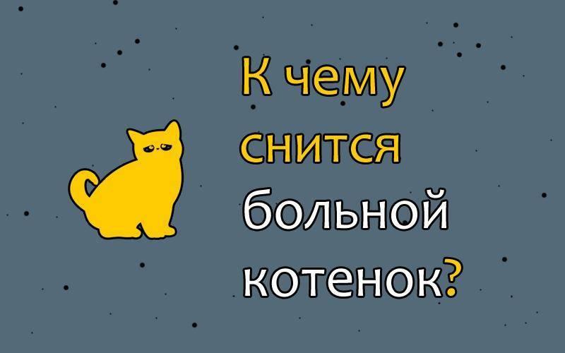 Серый котенок кормить