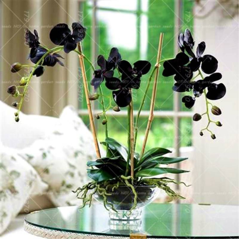 Орхидея — уход дома, приметы
