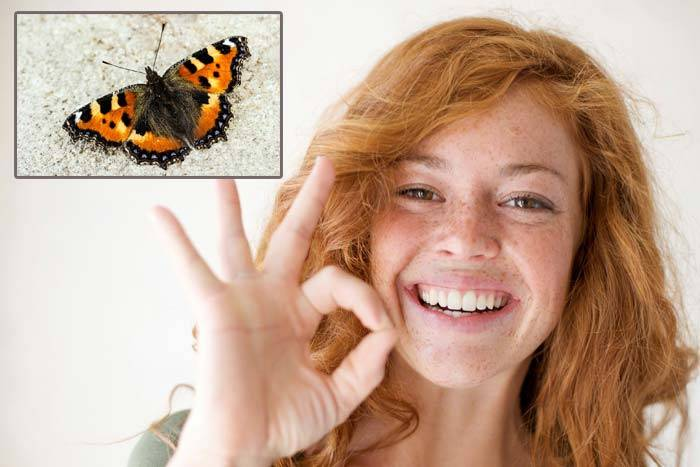 Бабочка залетела в окно, комнату, квартиру, дом, офис, машину: примета. что означает, если в дом залетела бабочка шоколадница, темная, черная, серая, ночная? примета: бабочка села на окно, стучится, л