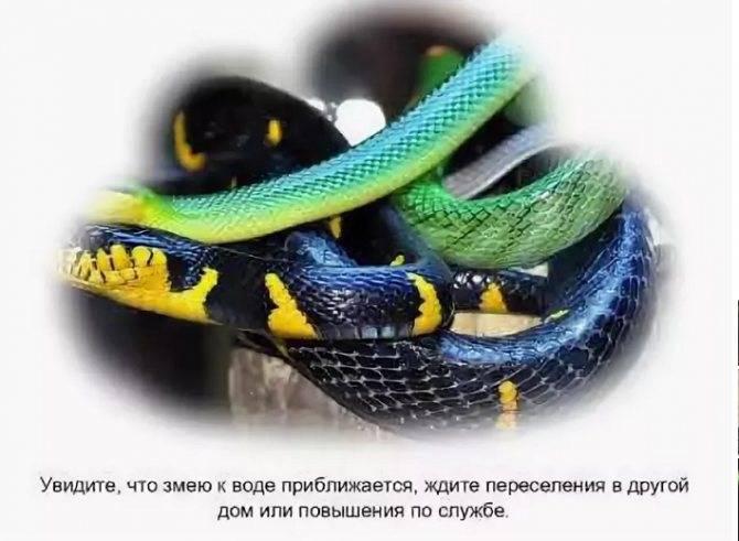 Сонник укусила неядовитая змея. к чему снится укусила неядовитая змея видеть во сне - сонник дома солнца