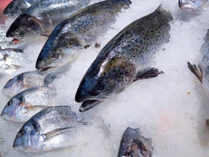 К чему снится рыба женщине: значение сна, самое полное толкование сновидений по соннику - tolksnov.ru