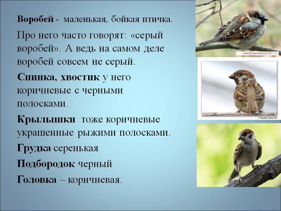 Приметы про птиц (ударилась в окно, залетела в дом)