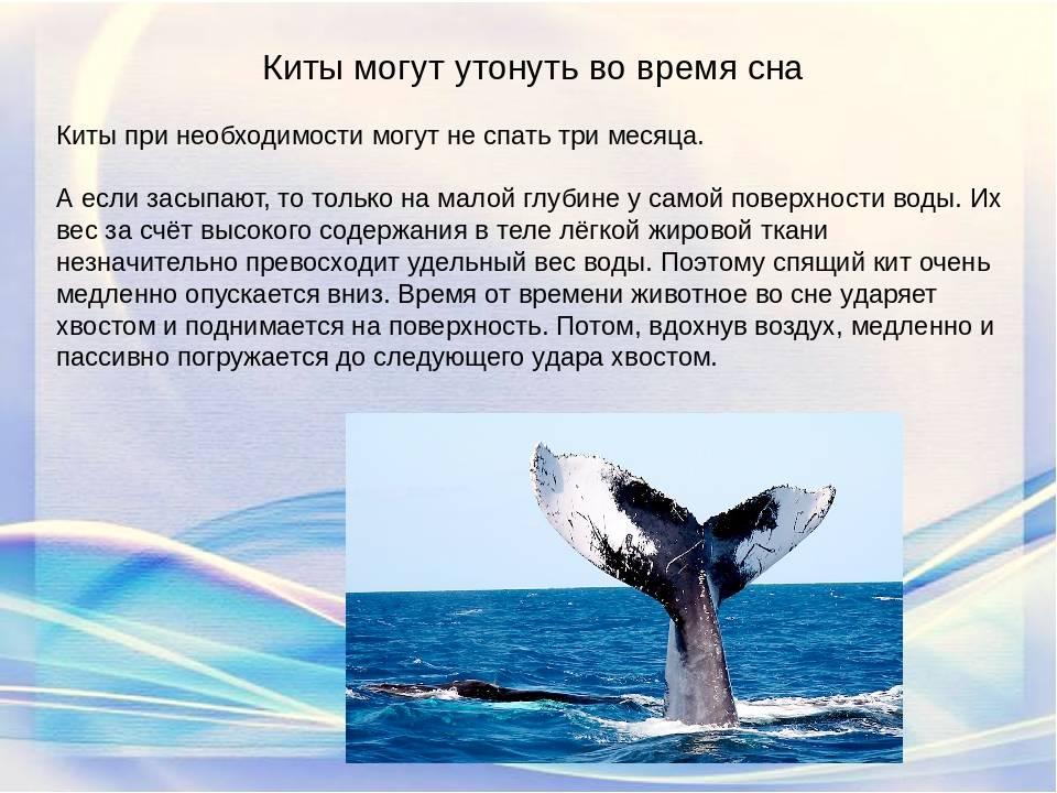 Что означает сон про кита — 42 значения по популярным сонникам