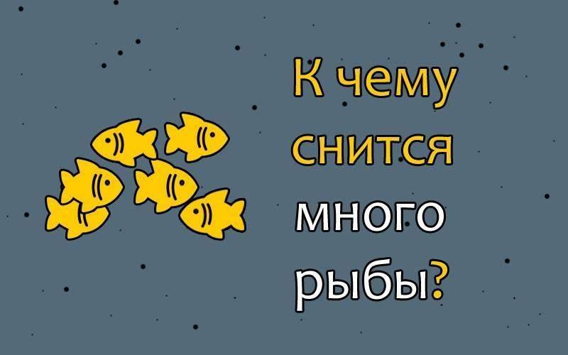 К чему снится рыба в воде? толкование по 29 сонникам