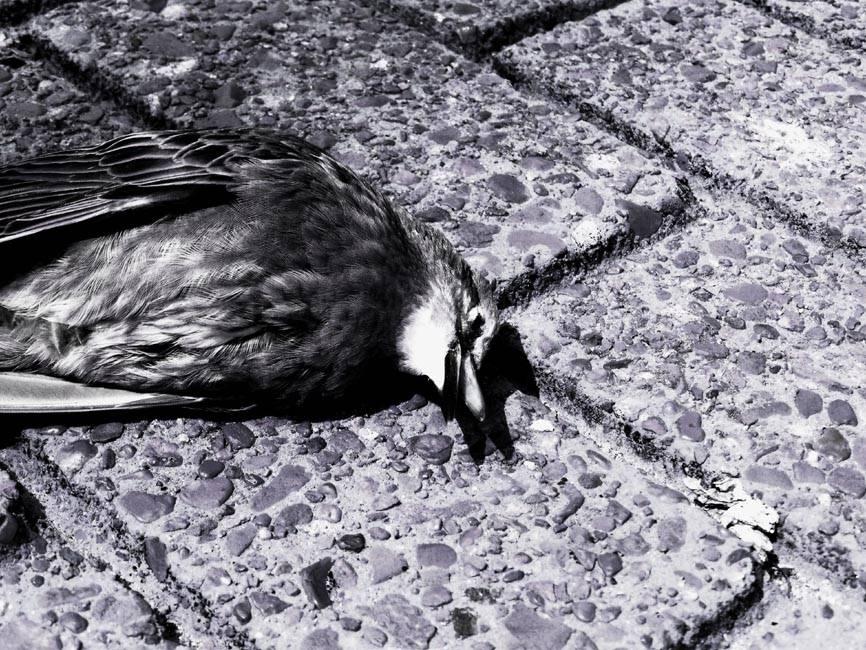 Сонник убитая птица мертвая. к чему снится убитая птица мертвая видеть во сне - сонник дома солнца