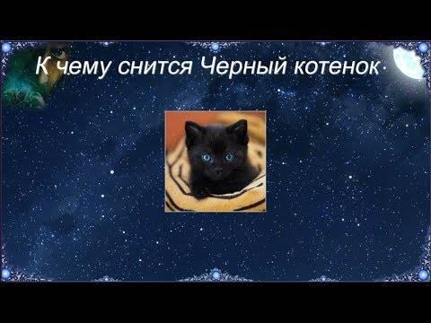Сонник большой черный кот. к чему снится большой черный кот видеть во сне - сонник дома солнца