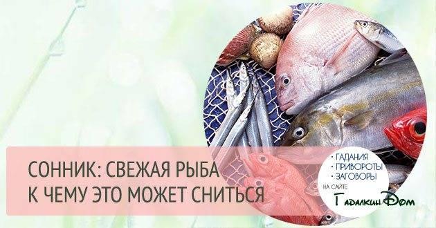 К чему снится большая рыба? толкование по 35 сонникам