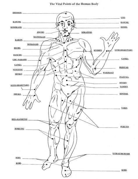 Биологические активные точки на теле человека, отвечающие за органы