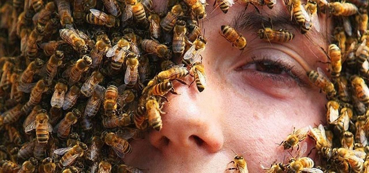 К чему снятся осы по соннику? видеть во сне ос  - толкование снов.