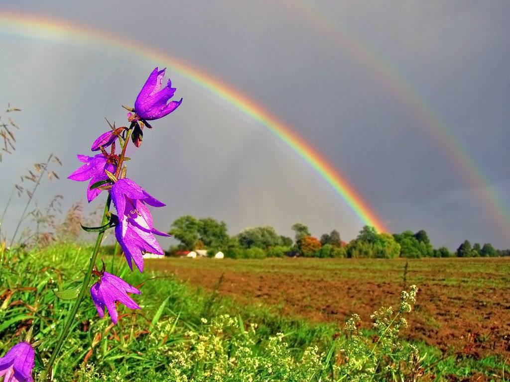 Увидеть радугу — хорошая примета или просто природное явление