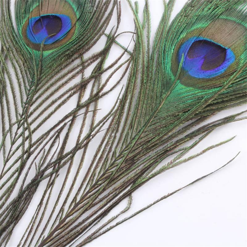 Приметы про перо павлина в доме: почему нельзя держать его в квартире