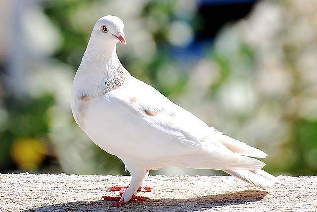 Сонник белый голубь в окне. к чему снится белый голубь в окне видеть во сне - сонник дома солнца