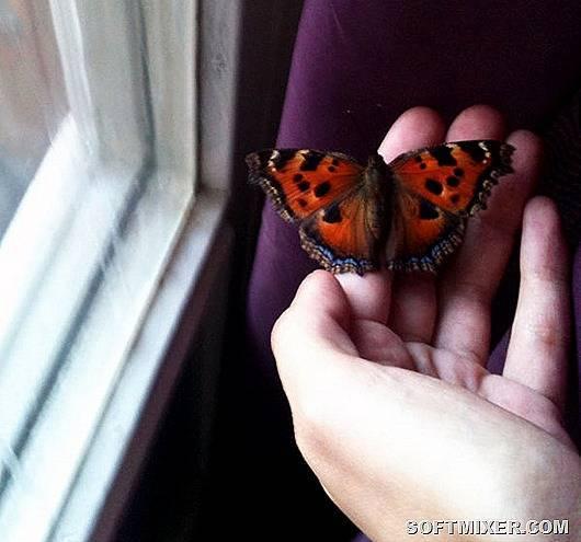 Приметы о бабочках в доме ???? астрология и эзотерика