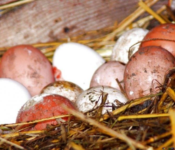 К чему снится тухлые яйца женщине или мужчине - толкование сна по сонникам