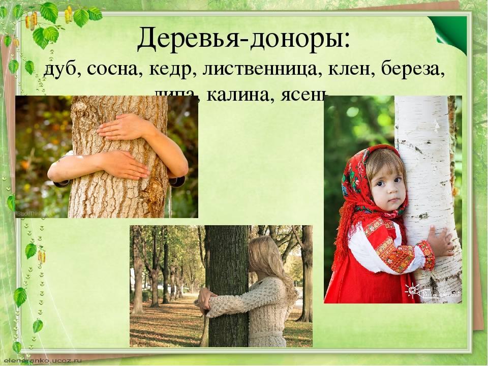 Деревья: особенности энергетики – женская санга