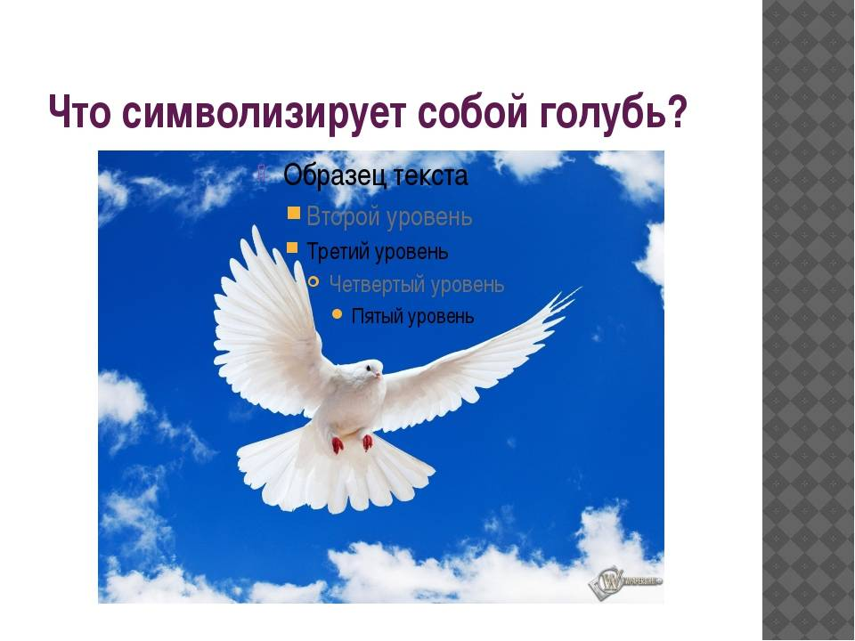 Белый голубь символ чего